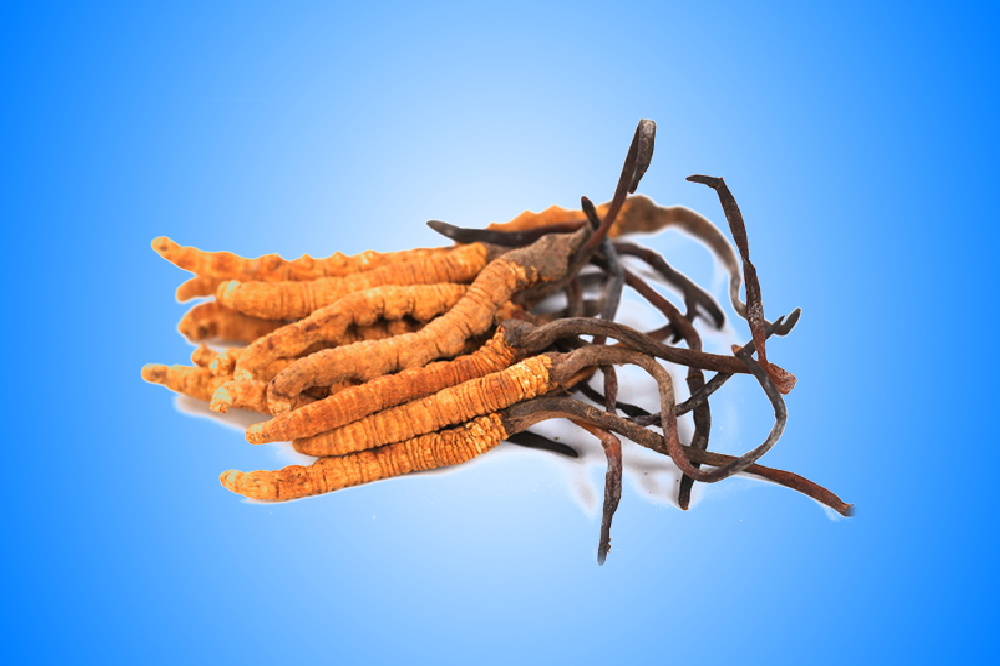 Cordyceps - the source of immortality
